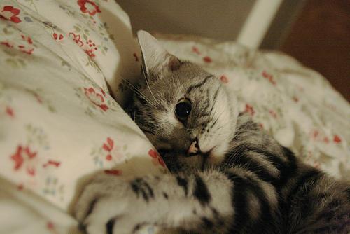 5 причин нарушения сна